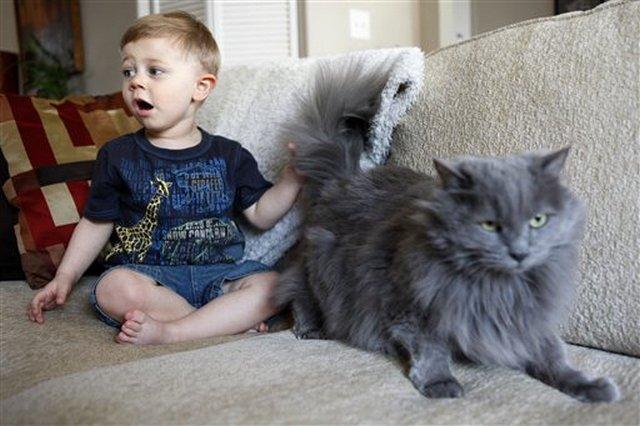 也没有可爱的小孩与宠物