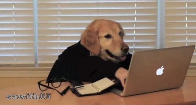 狗狗上班族